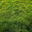 Grass grass top view — Stock Photo