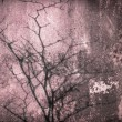 Pink old wall tree shadow — Stock Photo