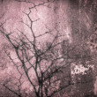 Pink old wall tree shadow — Stockfoto
