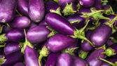 Eggplant purple — Stock Photo