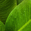 Green leaf background - Stockfoto
