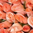 Stock Photo: Light orange color roses
