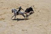 Rider and bull — Stock Photo