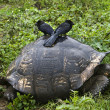 Tortue - Stock Photo