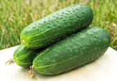 Green cucumber — Stock Photo