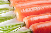 Carrot close up — Stock Photo