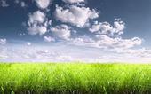 Bright sunny summer meadow — Stock Photo