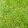Stock Photo: Grassy lawn