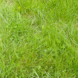 Grassy lawn — Stock Photo