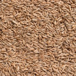 Seeds of rye closeup — Stock Photo