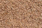 Seeds of rye closeup — Foto de Stock