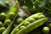 Chícharos verdes — Foto de Stock
