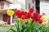 Tulipanes rojos y amarillos — Foto de Stock