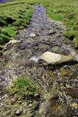 Small stream — Stock Photo