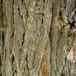 Old bark — Foto Stock