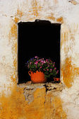 Flowers in old window — Stock Photo