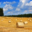 Bales of straw - Stock Photo