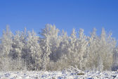 Winter forest 01 — Stock Photo