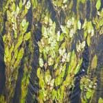 Green alga — Stock Photo #3349128