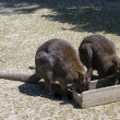 Stock Photo: Marsupials