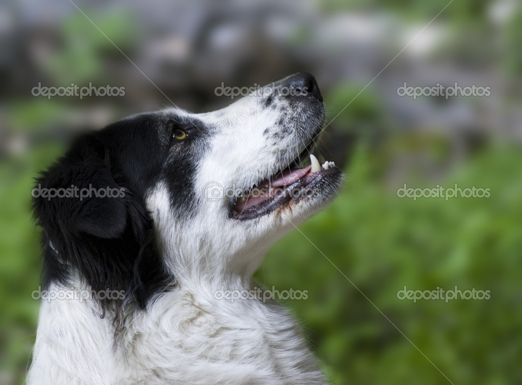 A dog — Stock Photo #3273942