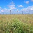 Wind-turbines on the summer field - Stock Photo