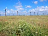 Wind-turbines on the summer field — Stock Photo