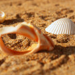 Some old seashells on the yellow sand — Stock Photo