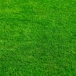 Natural grass — Foto Stock