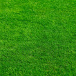 Stock Photo: Natural grass