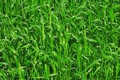 Fertile grass — Stock Photo