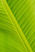 Banana leaf — Stock Photo