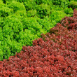 Red and green — Foto Stock