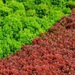 červená a zelená — Stockfoto