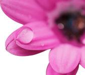 花の上の露の滴 — ストック写真