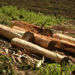 Stock Photo: Logs