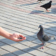 Boy is feeding the birds — Stock Photo