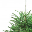 Half of green christmas fur-tree - Stock Photo