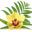 Palm leaf and yellow orchid — Stock Photo #3202395