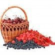 Berries and the basket — Stock Photo