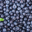 Sweet bilberries as a background — Stock Photo