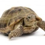 Turtle2 — Stock Photo