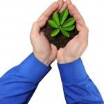 绿豆芽 — 图库照片