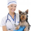 Veterinary with a dog for a review — Stock Photo