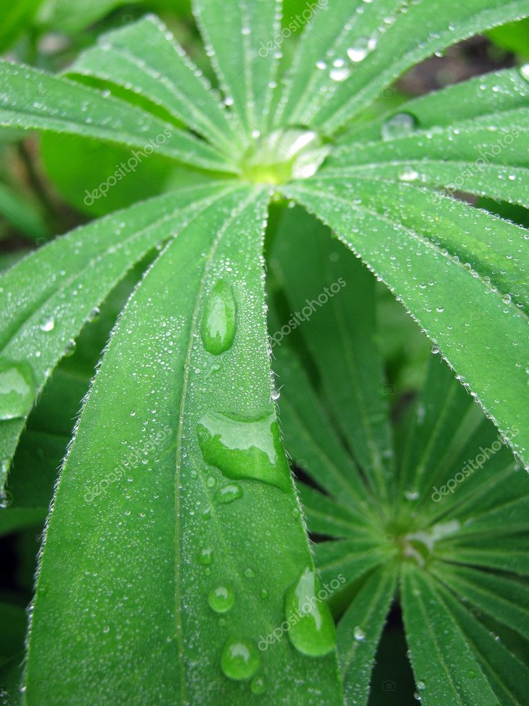 The grass in the garden after the rain — Stock Photo #3239134