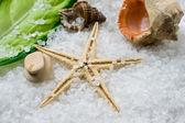 Морская соль в оболочке на фоне соли — Стоковое фото