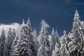 Winter trees . — Stock Photo