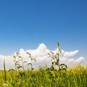 Green grass and perfect sky — Stock Photo