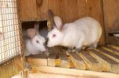 Rabbits — Stock Photo