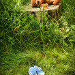 Little stuff teddy bear laying on stump - Foto Stock